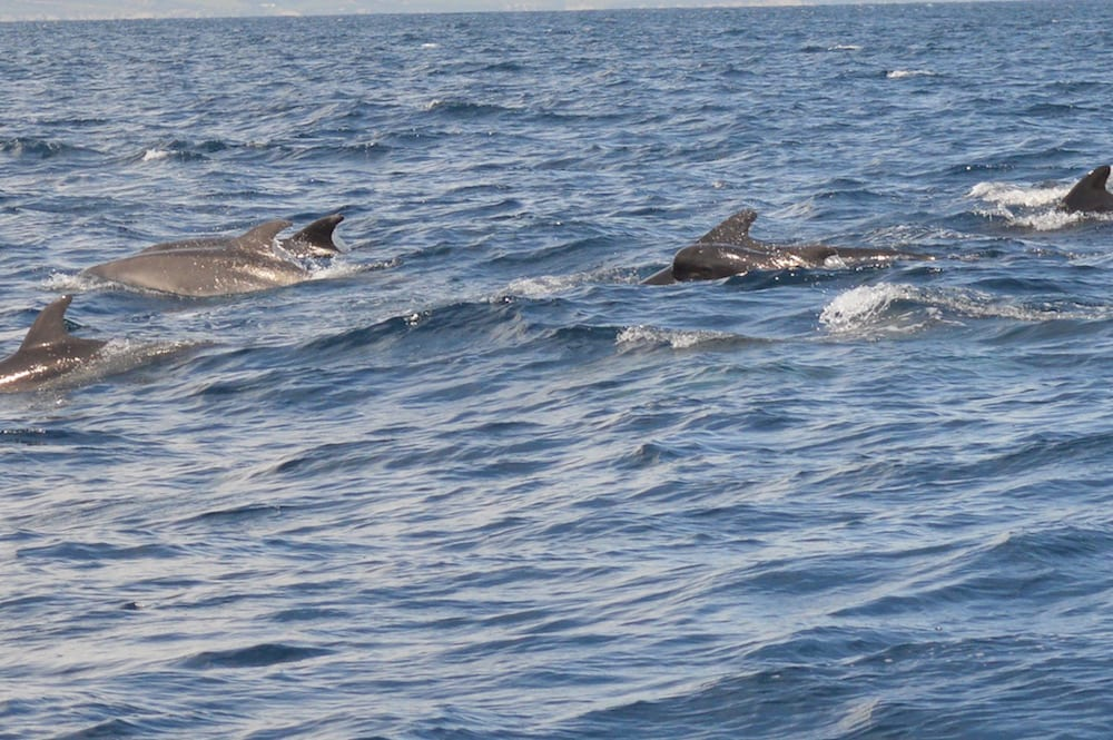 Whale Watching Tarifa 2016-11