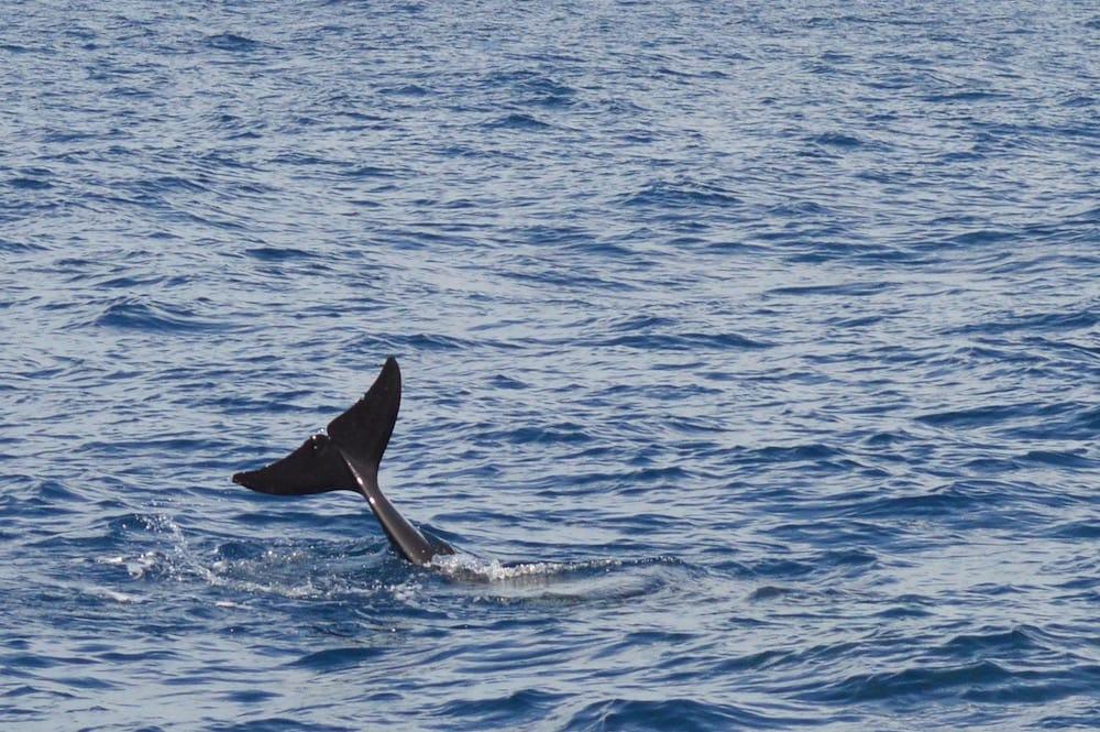 Whale Watching Tarifa 2016